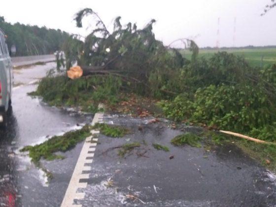 В Беларуси на трассе М6 из-за сильного ветра дерево упало на движущуюся фуру 3
